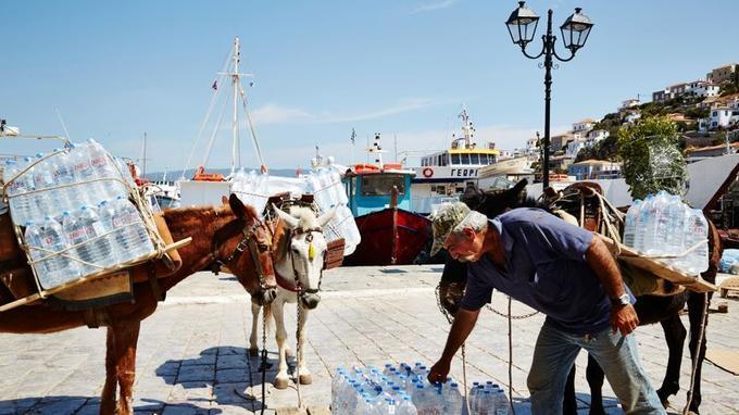 Les caravanes d'ânes attendent patiemment leur chargement sur le quai d'Hydra.