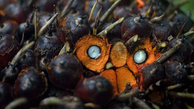 Le noyau blanc qui se trouve au cœur des fruits du palmier à huile est utilisé pour produire l'huile de palmiste.