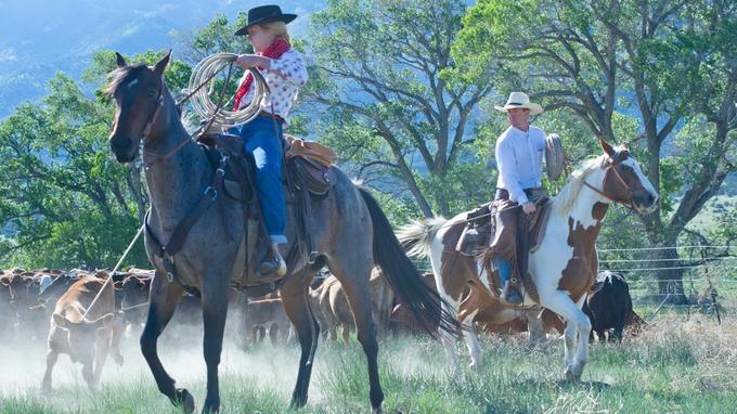 Dans un nuage de poussière, les ranchers - et les rancheuses de plus en plus nombreuses - traînent sans ménagement leur patient vers le foyer où rougissent déjà les fers.