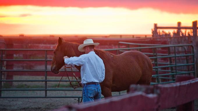 Dès l'aube, à l'heure où rougit la campagne, le rancher apprête son cheval. Les journées sont bien remplies, riches en longues chevauchées et parfois en émotions fortes.