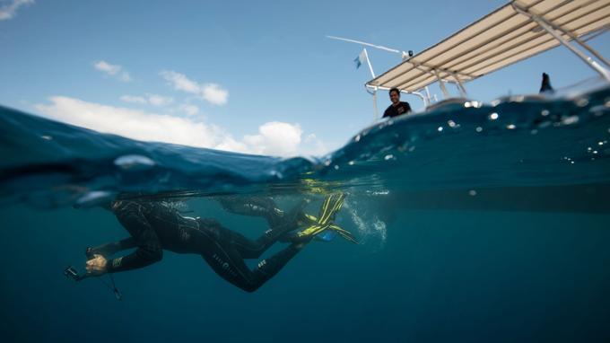 Comme à Moorea, les observations de baleines à bosse sont de plus en plus nombreuses en saison au large de Tahiti.
