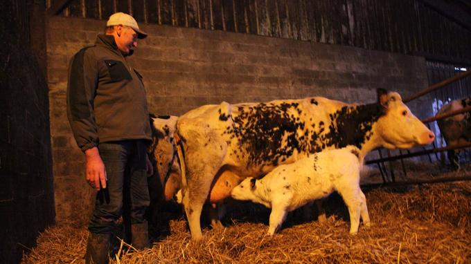 Jean Médard avec l'une de ses deux vaches allaitantes