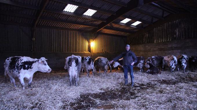 Jean Médard au millieu de ses vaches