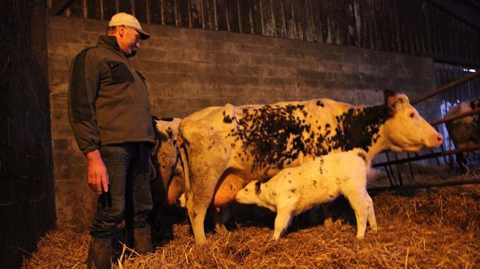 Jean Médard, producteur laitier