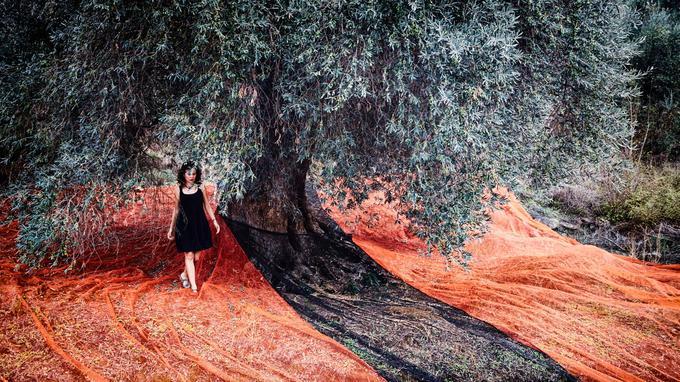 Depuis 9 000 ans, l'olivier est cultivé en Crète. L'arbre aux fruits d'or couvre le quart du territoire de l'île et fait vivre toute la population agricole.