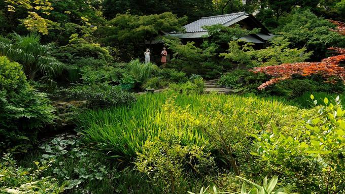 La nature au cœur du béton: les merveilleux jardins du musée Nezu.