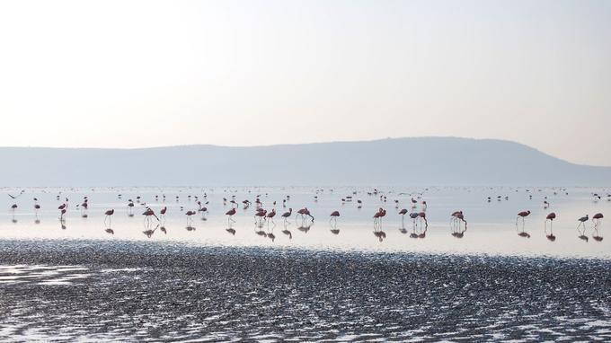 Le lac Nakuru, au Kenya. © Laetitia Ferreira