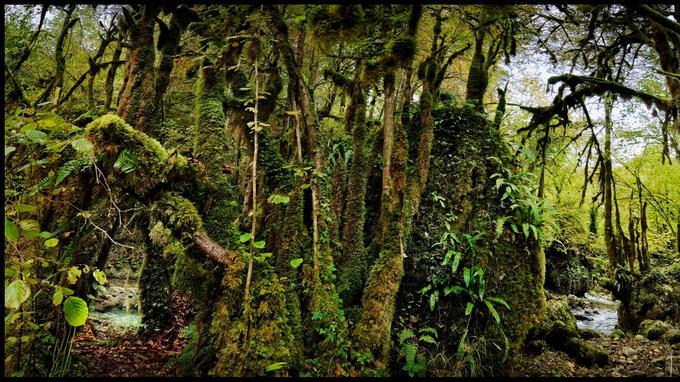 Parmi les secrets cachés de la région: la Gourgue d'Asgue, une forêt enchanteresse surnommée la «petite Amazonie des Pyrénées».