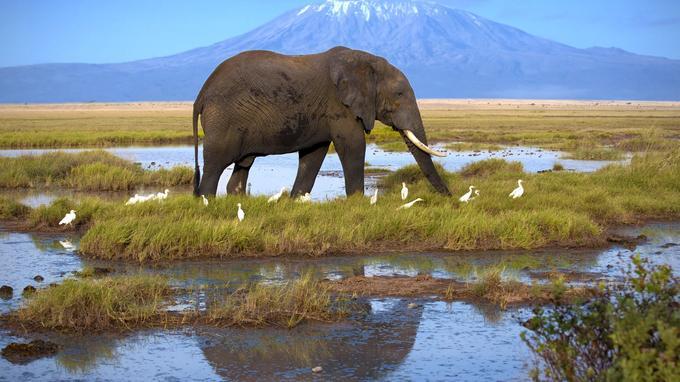 Dans le parc national d'Amboseli. © Shutterstock Andrzej Kubik