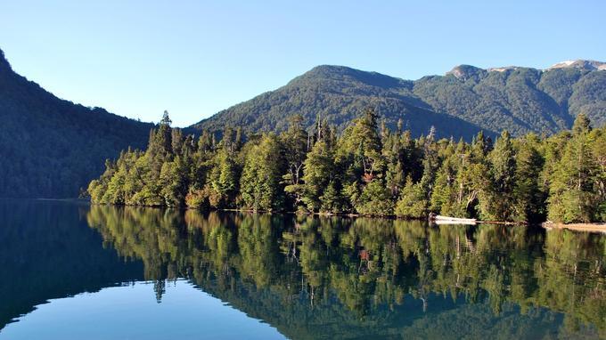 Le du lac et la forêt Alerce tempérée. (Ricardo Villalba)