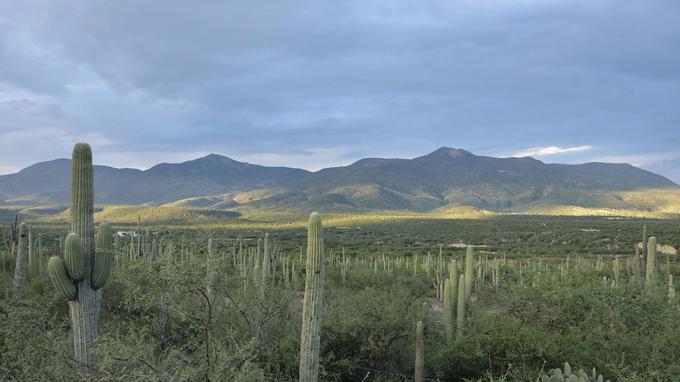 Les nombreux cactus de la région de la Vallée de Tehuacán-Cuicatalán. (Diana Hernandez)
