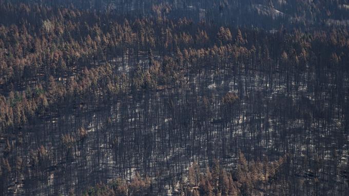 Les flammes ont détruit plus de 600.000 hectares au Canada depuis avril dernier.