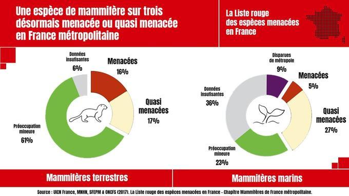 Un tiers des mammifères menacés en France