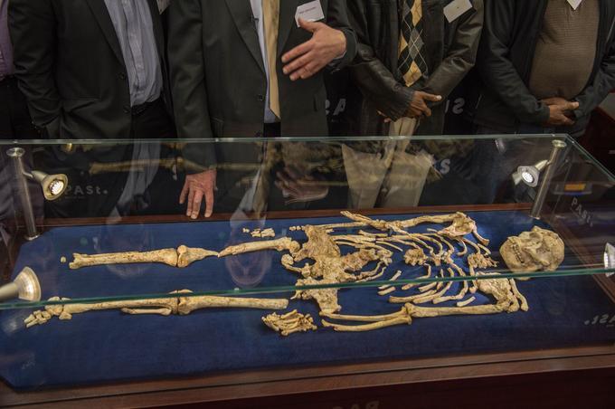 L'australopithèque Little Foot, 3,67 millions d'années, enfin sortie de sa gangue