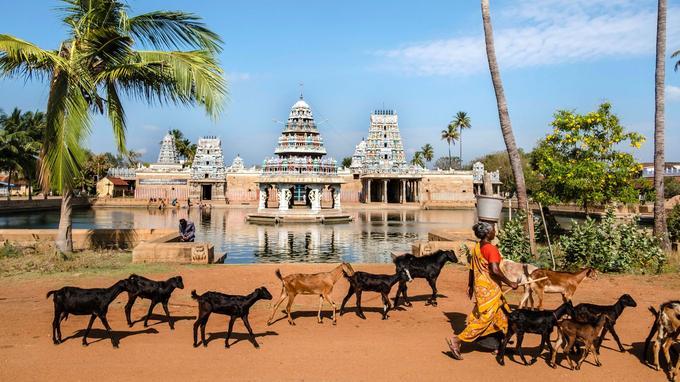 Comme ici à Kovilur, les villages de la région sont organisés selon un plan en damier avec, à la sortie, un temple hindouiste et son plan d'eau dans lequel les hommes se retrouvent pour se rafraîchir ou laver le linge.