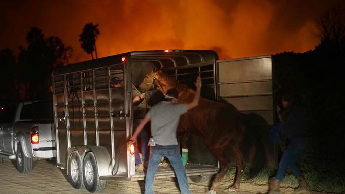 Face au «Lilac fire», les chevaux sont évacués dans la précipitation dans le Bonsall en Californie.