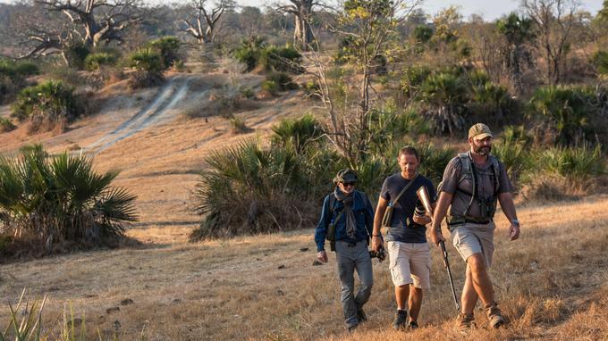 Le safari proposé par l'écolodge Beho Beho permet d'aller à pied à la rencontre des animaux à l'approche de la nuit.