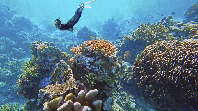 Découverte des récifs coralliens de l'île de Komodo.