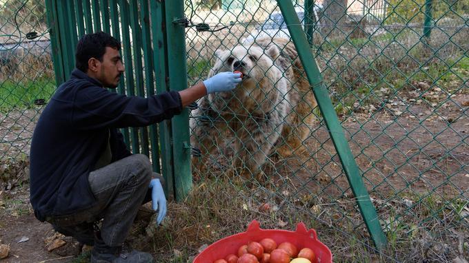 Nourris sainement et régulièrement, les animaux récupèrent très vite.