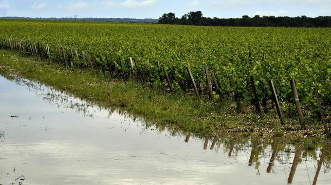 Des vignes inondées après le passage d'un violent orage à Macao, près de Bordeaux.
