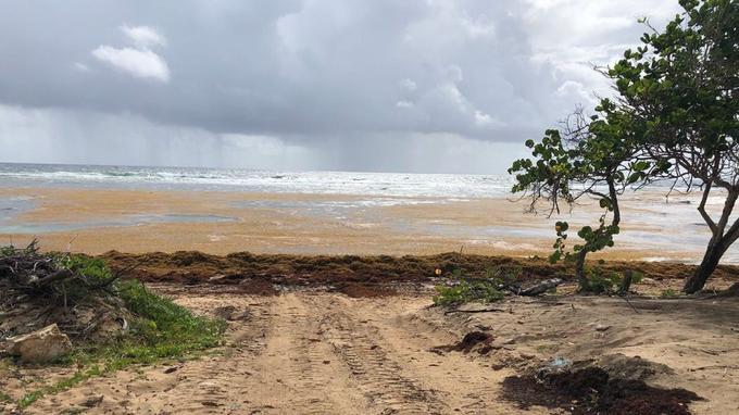 La plage d'Anse Maurice, Gros Cap, à Petit Canal.
