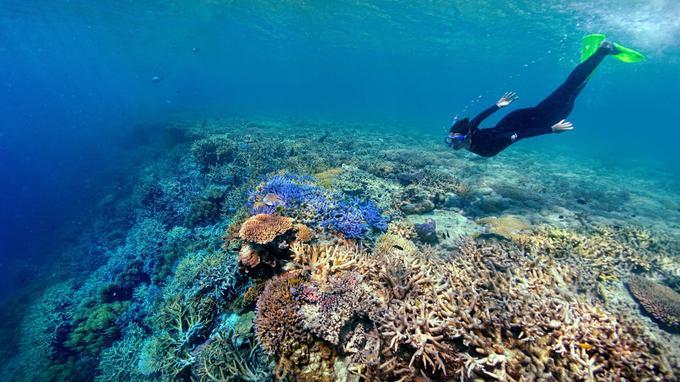 Certaines portions de la grande barrière de corail peuvent être explorées en apnée.