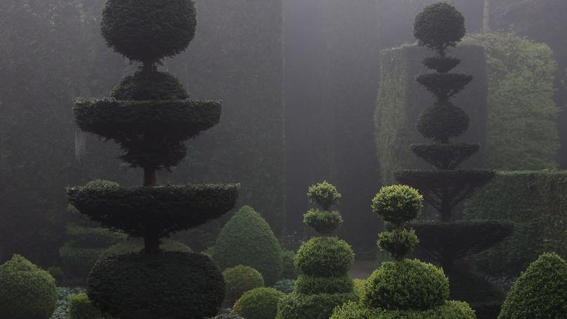 Buis l 39 art topiaire en majest dans les jardins de la ballue for Baraque jardin