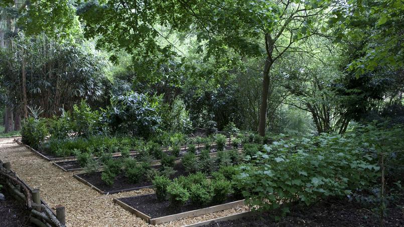 La pépinière des petits buis a pour but de détecter les variétés tolérantes aux nouvelles maladies qui déciment ces arbustes.