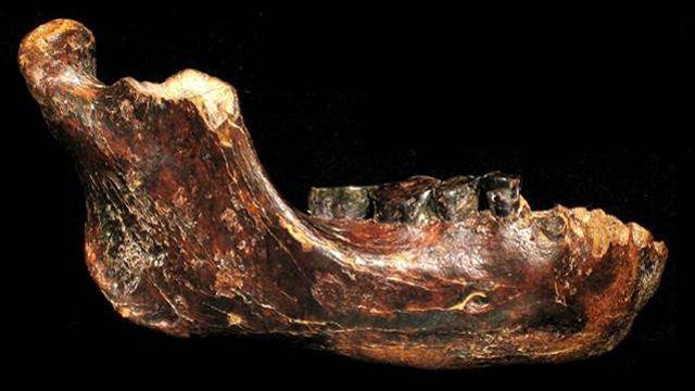 Baptisée «Penghu 1», la mandibule en bon état de conservation est pourvue de quatre dents complètes.