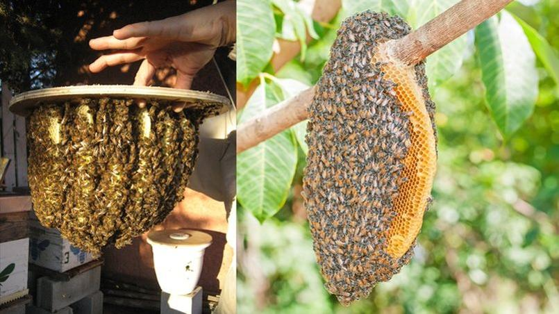 Beaucoup de buzz autour du miel de nos ruches - La ruche a miel ...