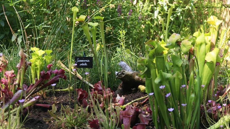 carnivore parc l 39 univers impitoyable des plantes tueuses. Black Bedroom Furniture Sets. Home Design Ideas
