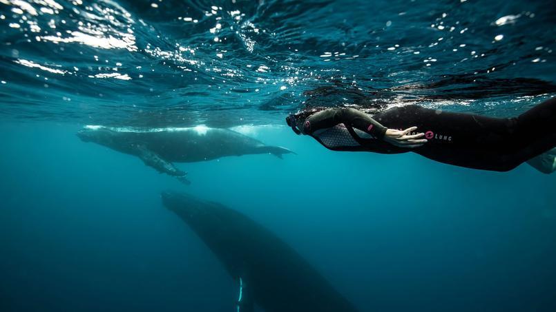 Observer les évolutions d'une baleine et son baleineau : un spectacle émouvant et d'une grâce inouïe.