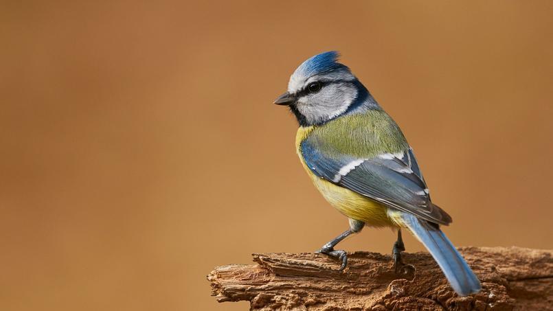 L 39 hiver les oiseaux du jardin ont besoin de nous for Jardin des oiseaux