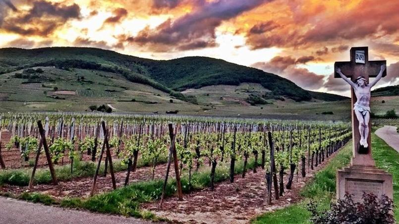Le Schlossberg est l'un des 51 grands crus du vignoble alsacien. Le premier classé, en 1975.
