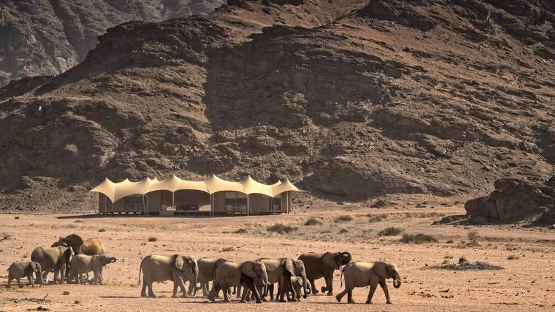 Un troupeau d'éléphants passe devant le lodge. © Eric Martin pour le Figaro Magazine.