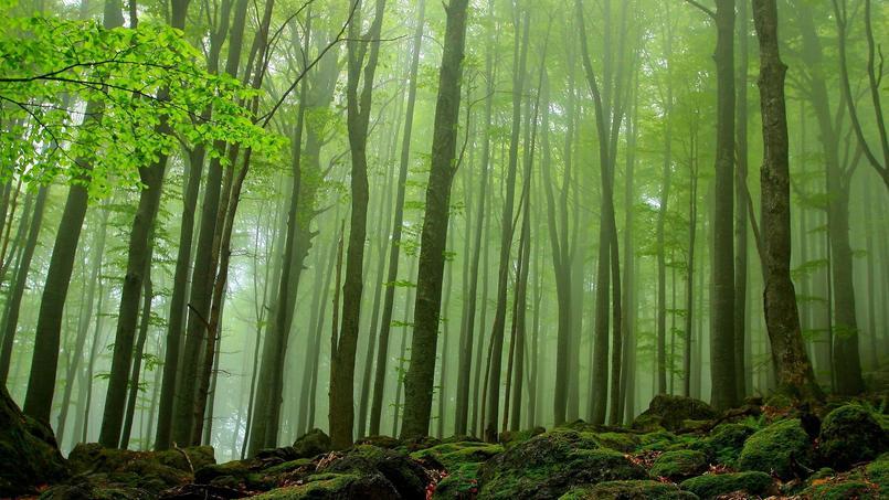 Forêts primaires de hêtres des Carpates, en Allemagne. (CBNPD)