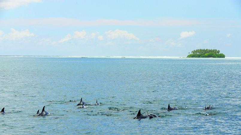 Des dauphins dans le lagon à proximité du motu Atara. (SCP)