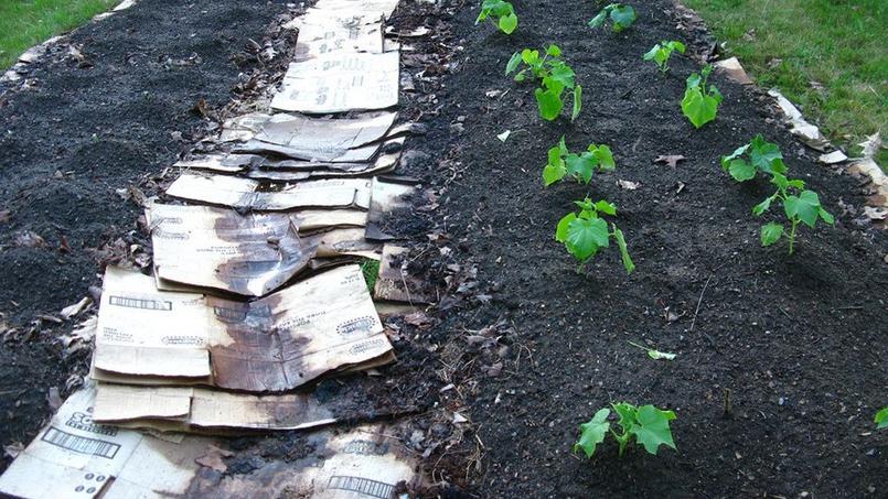 Les cartons protégent efficacement les sols non cultivés. Crédit photo: fireonthehill/Flickr.