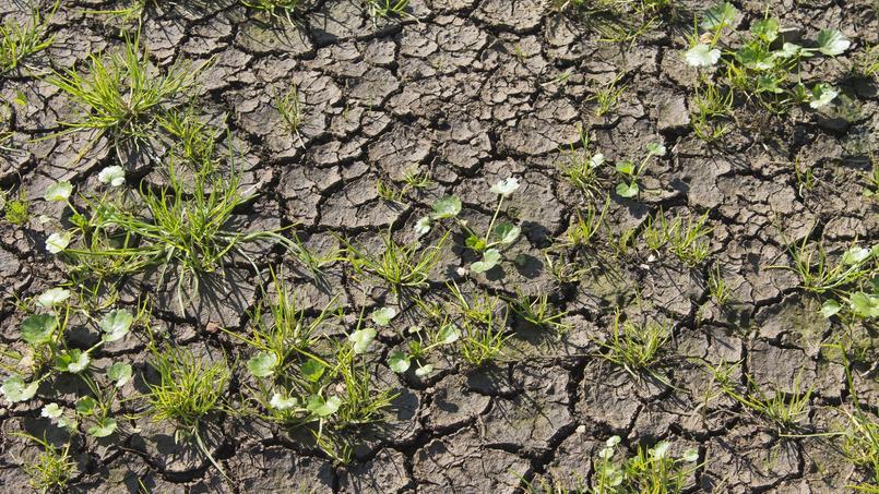 «Mon gazon semé en terrain argileux ne pousse pas...»