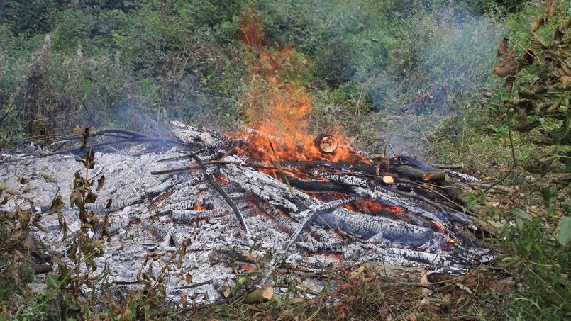 Peut on donner de la cendre de bois aux framboisiers et for Cendre de bois au jardin