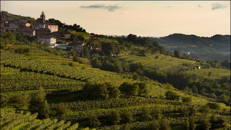 Changement de décor dans la région vinicole de Goriska Brda, où des vignes s'étendent à perte de vue, produisant un vin de qualité.