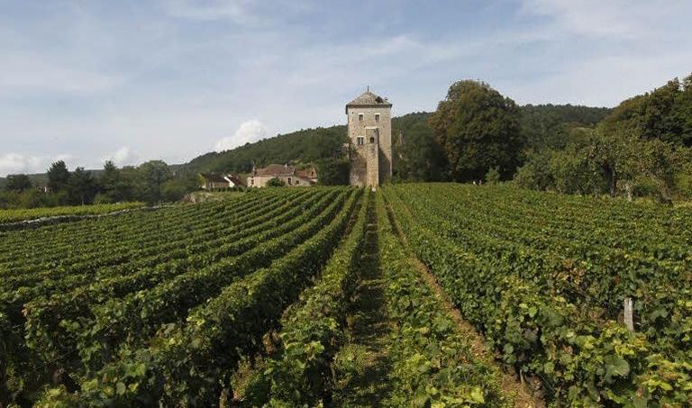La vigne de Gevrey-Chambertin en Bourgogne. Crédit photo: Sébastien Soriano / Le Figaro.