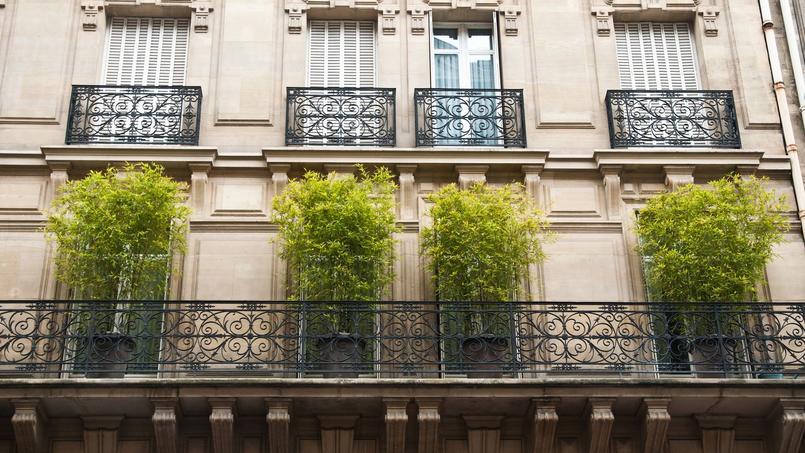 Quels types de bambou planter sur un balcon - Jardin sur un balcon ...