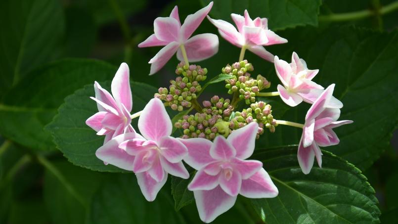 Journ es de courson la cr me des plantes chantilly - Journee des plantes chantilly ...