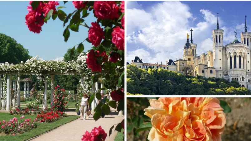 La roseraie de concours de Lyon (à gauche) et la rose 'Soleil d'or', créée en 1898 par le célèbre rosiériste rhodanien, Joseph Pernet-Ducher. Crédits photo: Ville de Lyon.