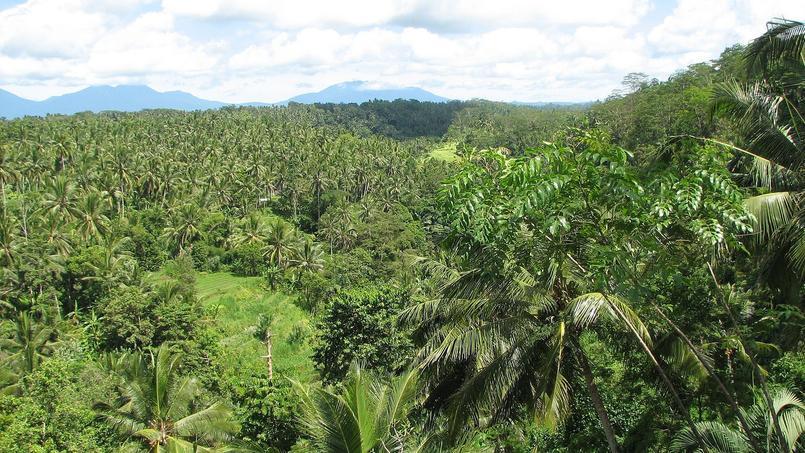 Forêt tropicale au Brésil, pays très affecté par la disparition des forêts au profit de l'agriculture intensive et des villes. (Crédit photo/DR)