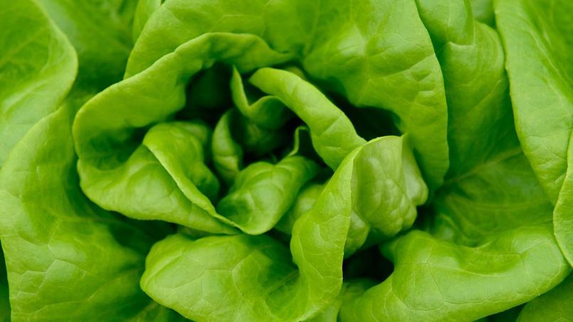 D'après cette ONG écologiste, 16% des salades contiennent la trace de cinq produits chimiques interdits en France.