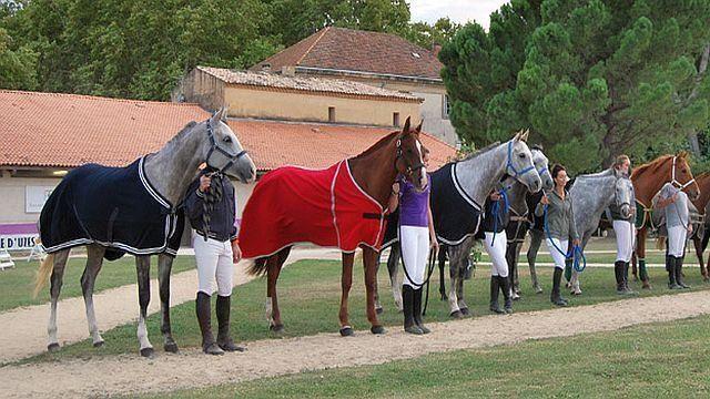 Les cheikhs arabes s'arrachent les chevaux d'endurance français