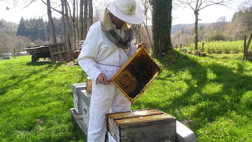 60 millions d'abeilles déjà parrainées. © Un toit pour les abeilles