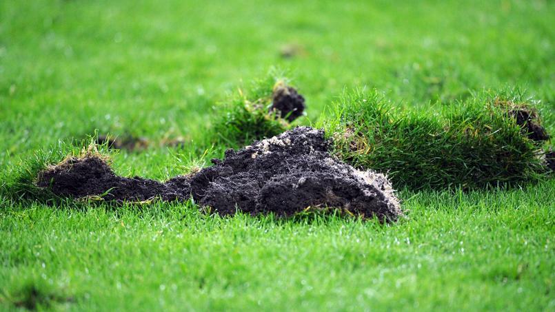 Deschamps enrage contre les cailloux sur la pelouse du Stade de France